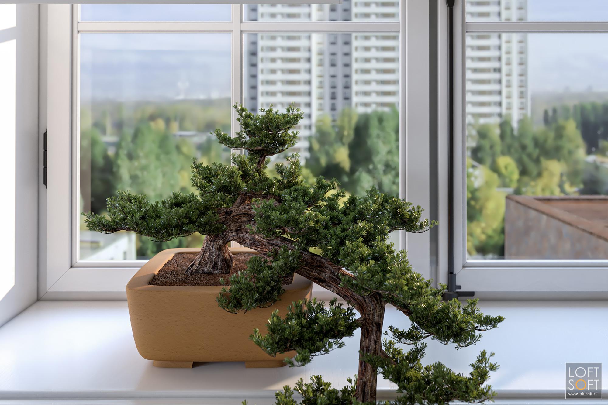 Бонсай как декор окна